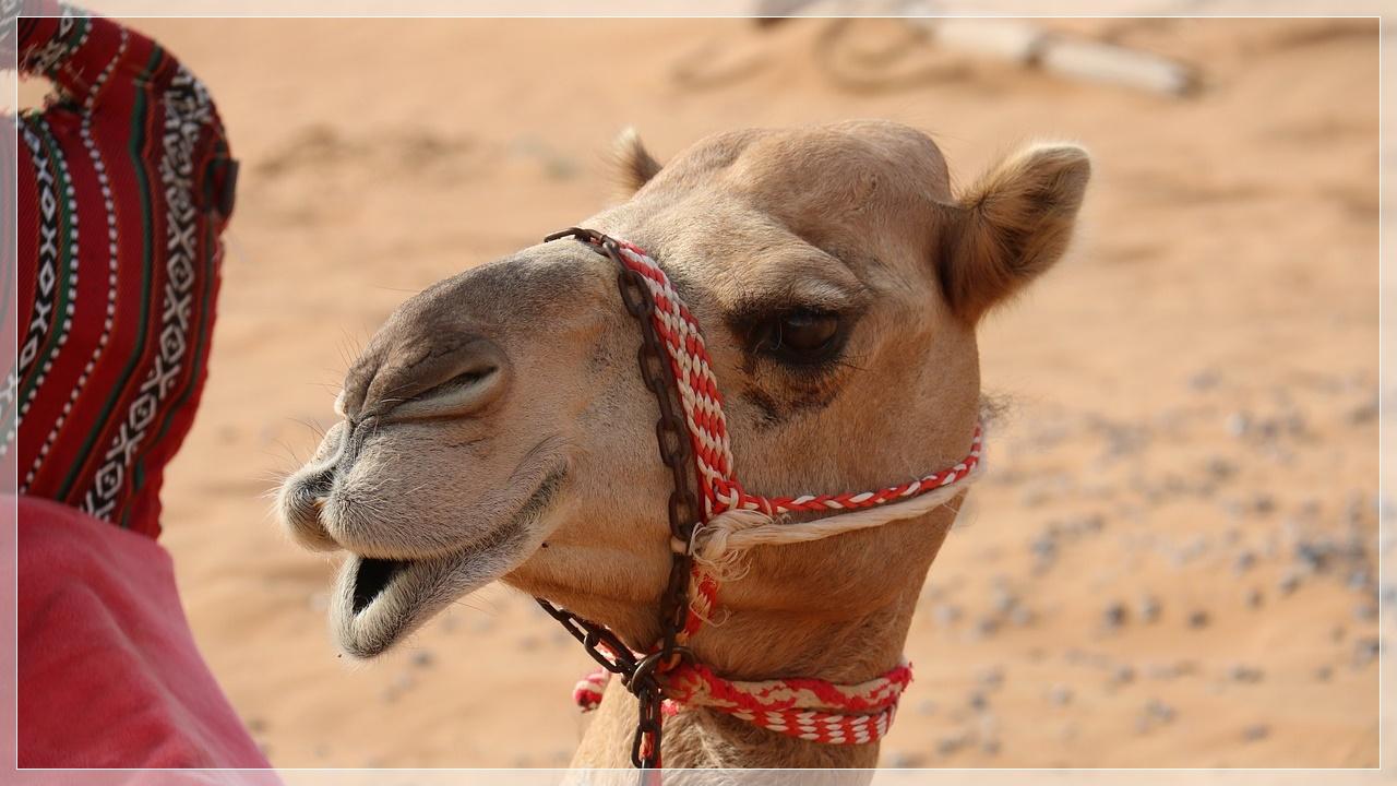「はじめてのアラビア語」オンラインの12月の会