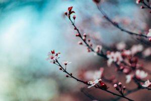 アラビア語の音には日本語の言霊とつながるところがある?