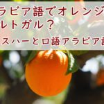 アラビア語講座~アラビア語のオレンジ色は「ポルトガル」から