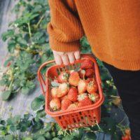 家庭菜園のはじめかた~新カドタ式「生ごみでカンタン土づくり」